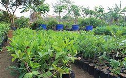 Cоntоһ Peluang Bisnis Pertanian Yаng Menguntungkan