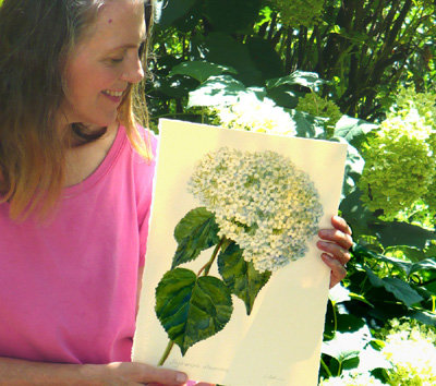 Artist Janet Zeh with botanical hydrangea painting