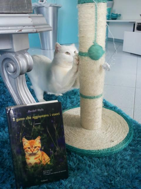 garzanti, gatto, rachel wells, cat cafè, gatti, amici a quattro zampe, pet terapy