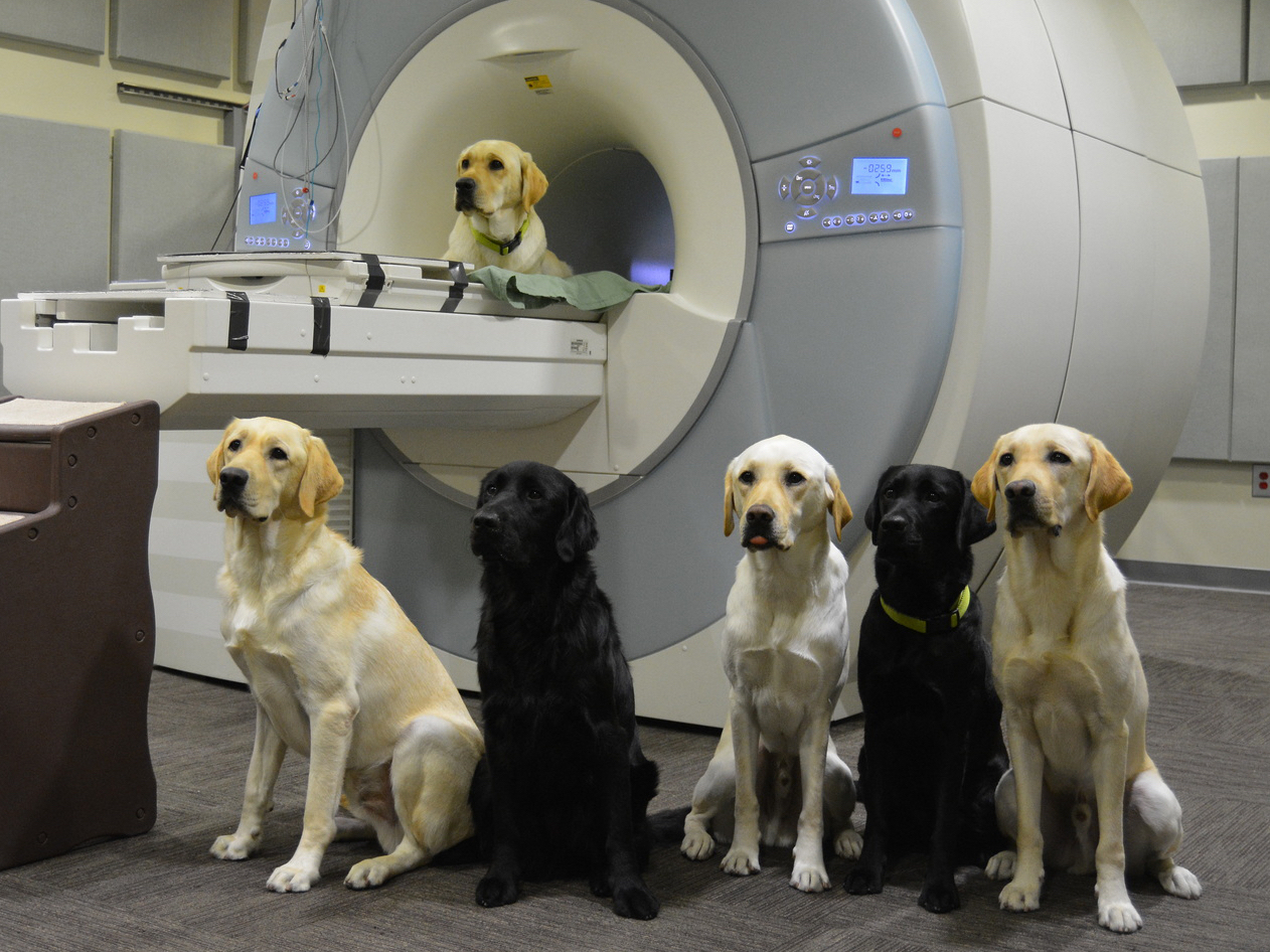 eScienceCommons: Brain scans of service-dog trainees help