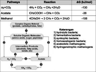 methanogen pathway dan pembentukan metan