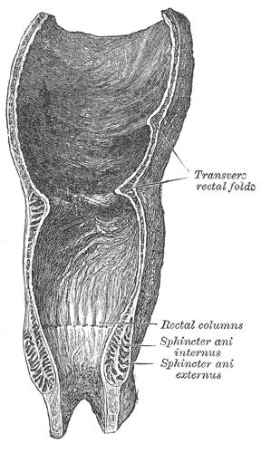 Anatomía del canal anal - AnSRo