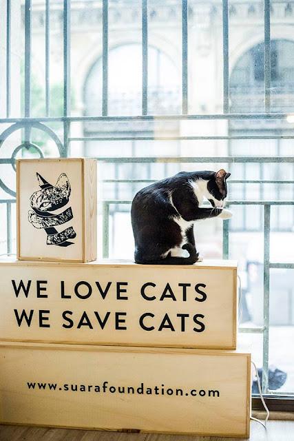 imagenes de gatos tiernos