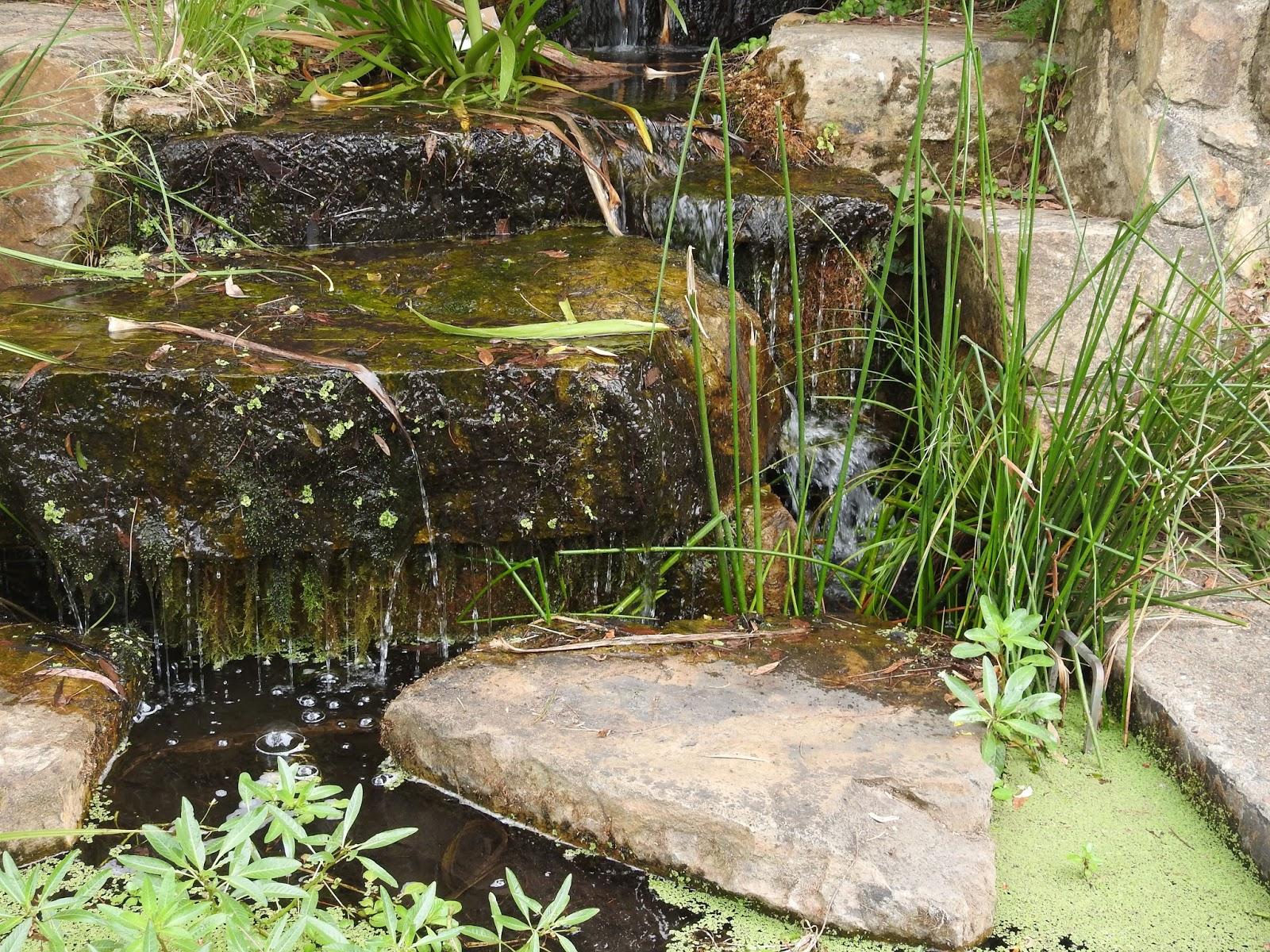 Australian National Botanical Gardens, Canberra | FEAST OR FAMINE
