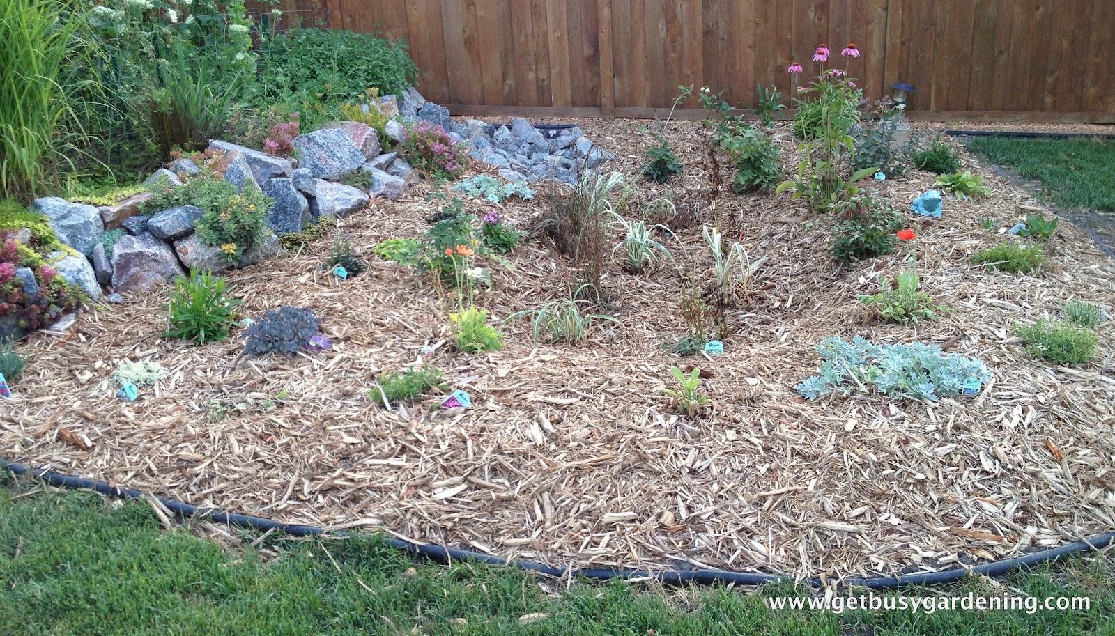 Rain Garden Done
