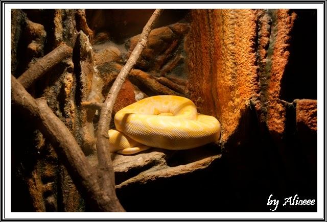 gradina-zoologica-Nyiregyhaza-serpi