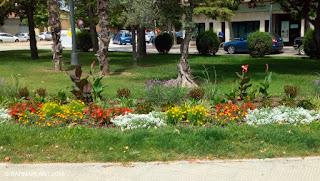 Solución Floral de Arribas Center-Barnaplant en antiguo Banco de España Huesca
