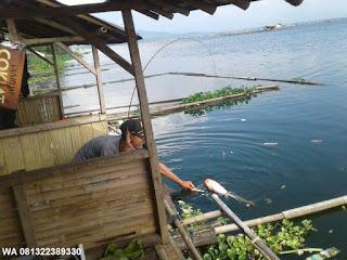 Umpan Serbuk Ikan Mas Cirata