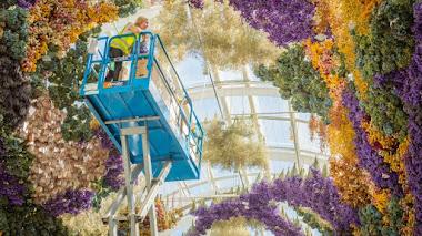 Dosel de flores preservadas de Rebecca Louise Law: The Canopy