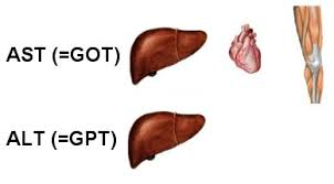 Obat SGOT dan SGPT Herbal