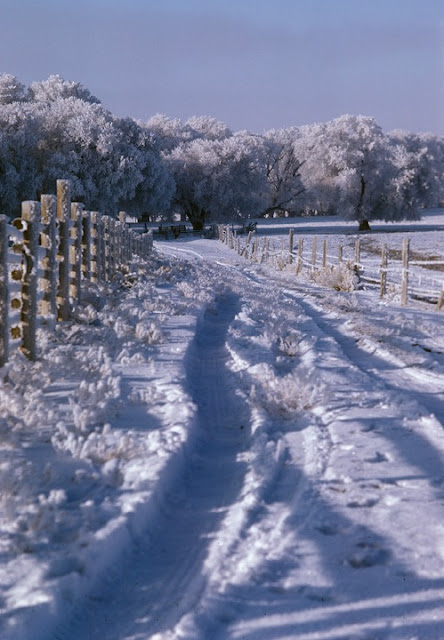 Snow scene with Fence and Trees