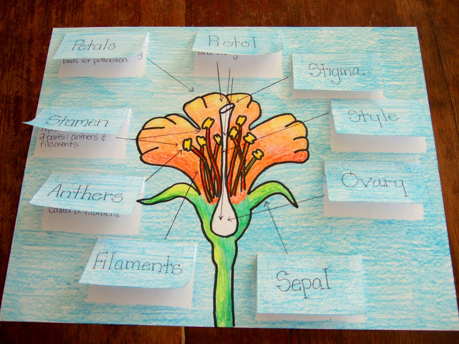 The Inspired Classroom Flower Parts And Their Jobs A Science Poster