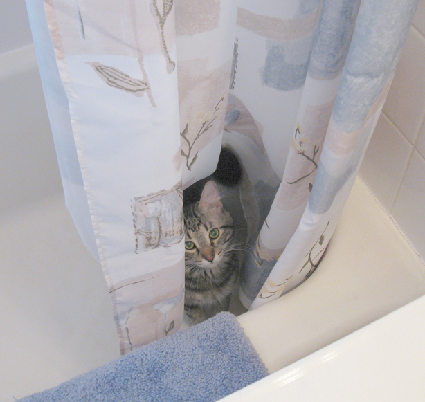 The Boy Will Slip Under Hem Of Shower Curtain And Hide Among Folds Either That In Itself Is Fun Or He Has More Patience Than I Thought