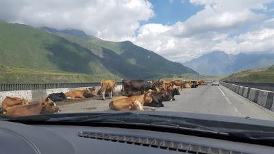 Vacas en la Carretera Militar georgiana