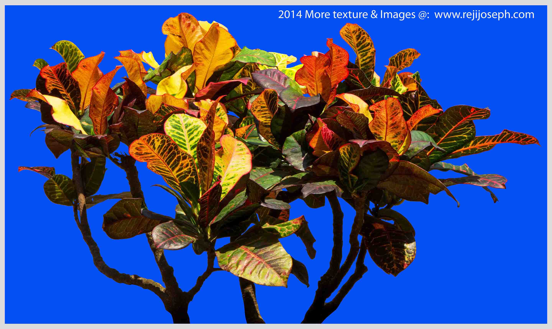 Garden plants texture 00018