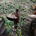 A Bangladeshi child laborer carries a empty bottles
