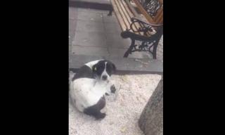 Το κλάμα του σκύλου που βρίσκει το αφεντικό του 3 χρόνια μετά!