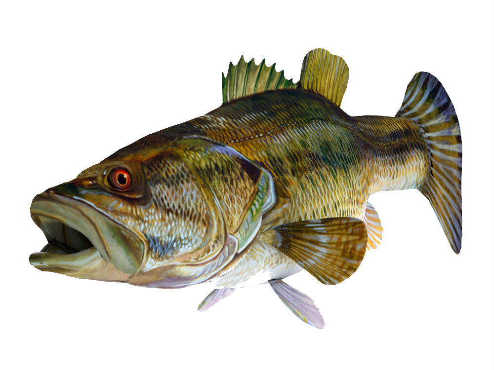 Png Sector Redeye Bass 3d Fish Png Image With Transparent Background