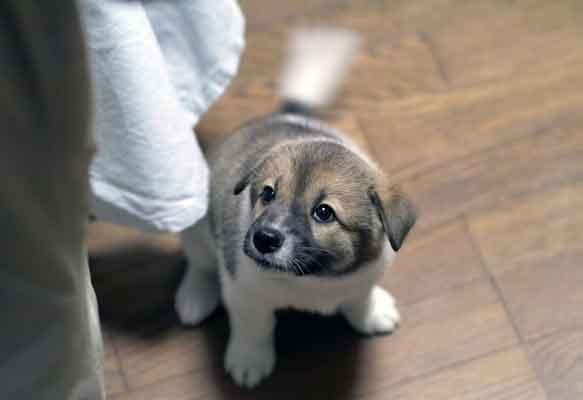 dog wag tail