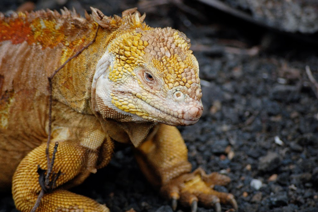 pengertian reptil, ordo reptil