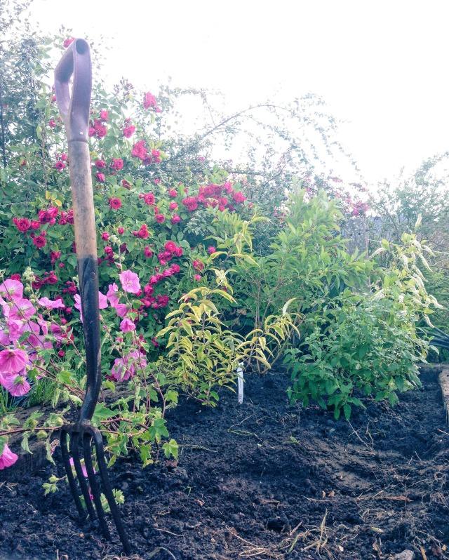 Spring Time Gardening Tips Modern Mummy