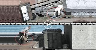 Θυσιάζει Σκυλί για να Σώσει Γυναίκα από  Πολική Αρκούδα.