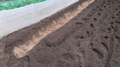 掘った溝に粉状ケイフンを撒く