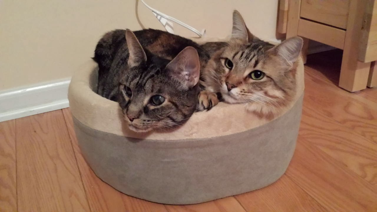 Funny cats - part 87 (40 pics + 10 gifs), two beautiful cats lays in cat's bed