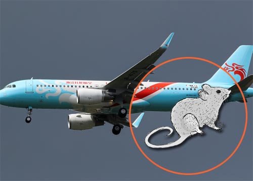 rat inside Loong Air aircraft