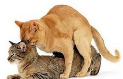Image result for Γάτος πηδάει, γάτος σκούζει