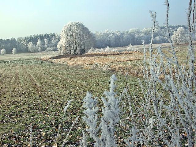 łąka i zima, grudzień, las, mróz