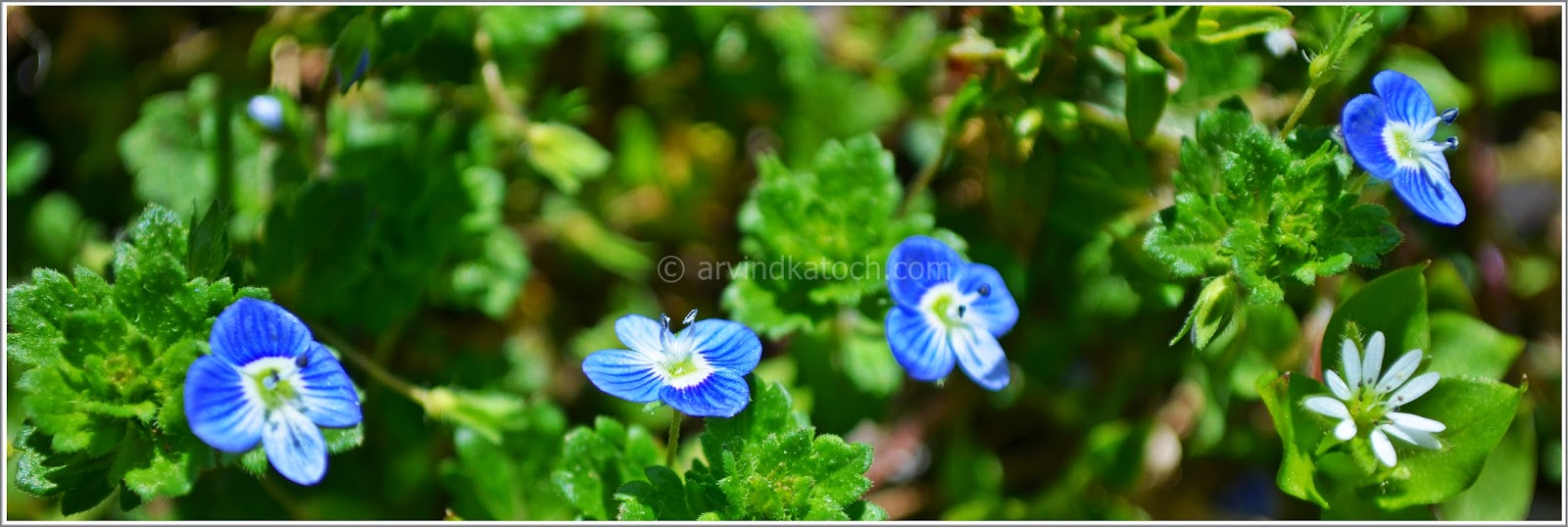 Tiny flowers, Flower world, Blue Flower,