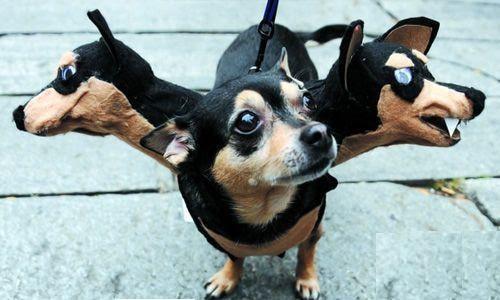 生活方便網: 這就是傳說中的地獄三頭犬?