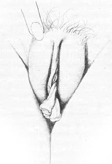 Жіночі статеві органи фото 8