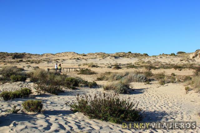 Dunas móviles en Doñana