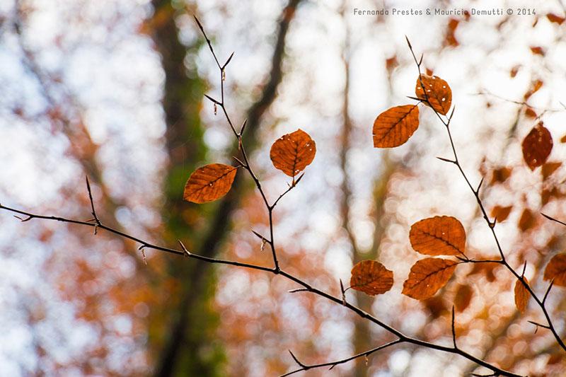 detalhes de folhas