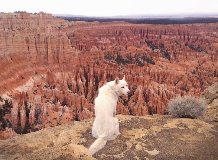 Bryce Canyon, Utah - He Toured America's Pristine Wilderness…And He Took His Human Along For The Ride.