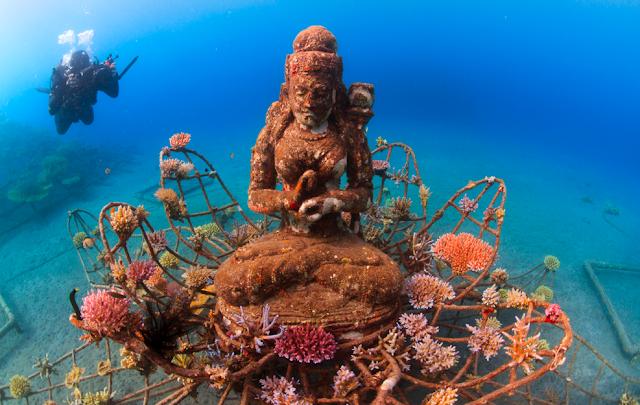 Wisata Spot penyelaman Pemuteran Singaraja Bali