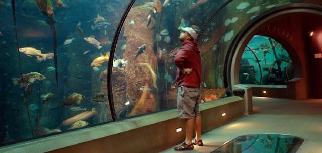 Best Aquariums in the USA: Oregon Coast Aquariums