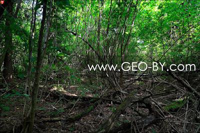 Лес у деревни Криницы. Дорог нет, только звериные тропы