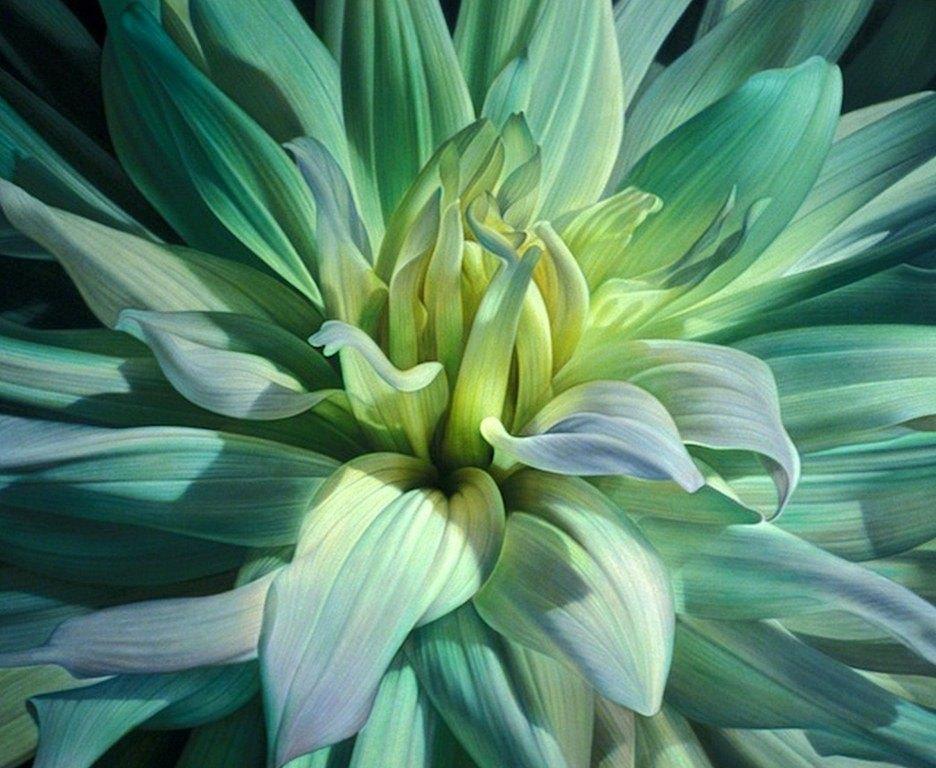 Imágenes Arte Pinturas: Flores para Pintar al Óleo