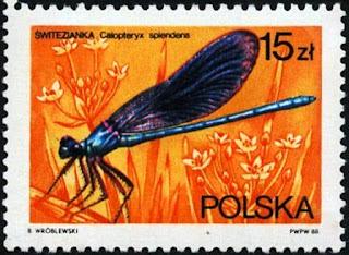 Sello polaco de una libélula azul o caballito del diablo verde (Calopteryx splendens)