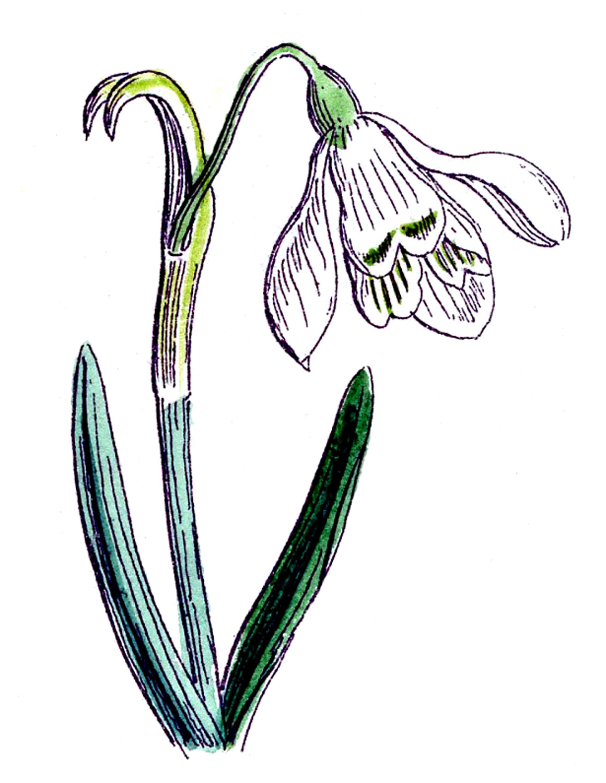 Spring Clip Art: Clip Art Pictures