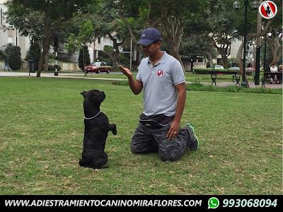 Entrenador Perros Miraflores