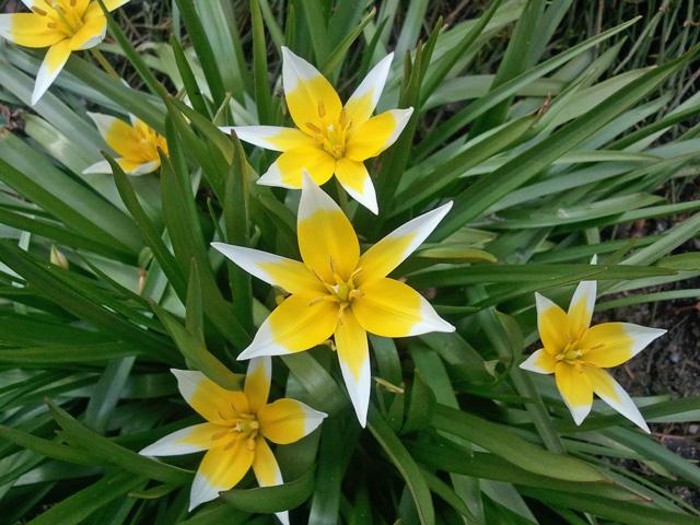 Reisetageblog: Frühlingsblumen aus der ganzen Welt: Botanischer Garten, Berlin