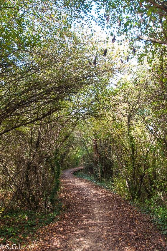 Vista del paseo del pantano Ullibarri Gamboa cerca de Vitoria