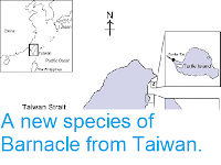 https://sciencythoughts.blogspot.com/2012/08/a-new-species-of-barnacle-from-taiwan.html