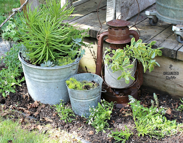 Succulents, Galvanized Buckets and a Rusty Lantern #junkgarden #gardenjunk