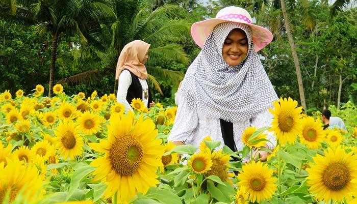 Taman Bunga Matahari Dewari, Salam, Magelang