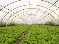 5 Keuntungan Memilih Memakai Greenhouse Untuk Pertanian